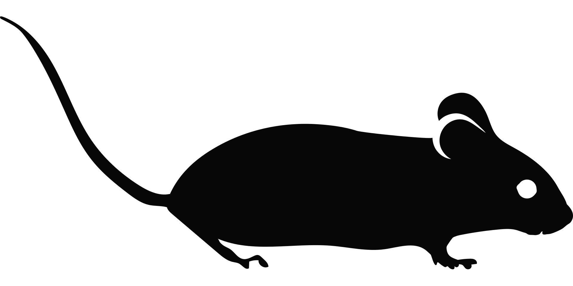 Experimental Alzheimer's drug improves memory in mice