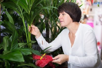 Studies: To protect against cold and flu viruses to help our houseplants