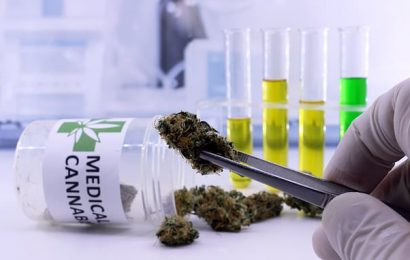 Cannabis could be downgraded by the World Health Organization