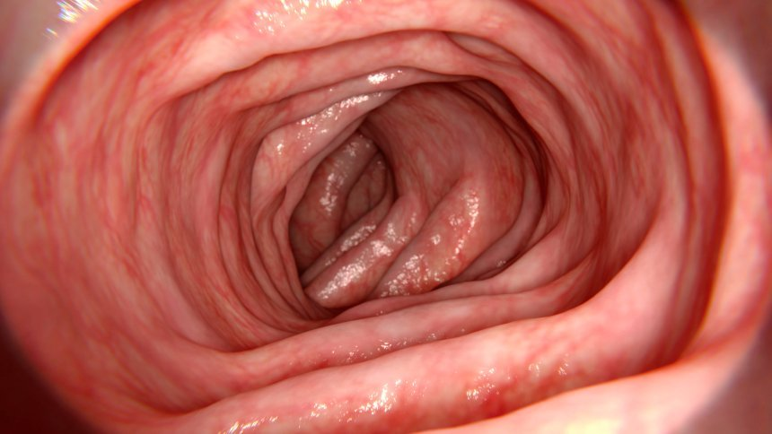 Almost 2000 unknown species of bacteria in the human bowel discovered