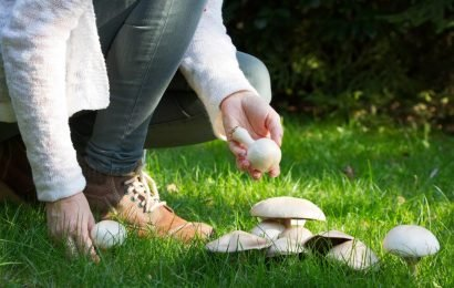 Researched: eat mushrooms helps our memory