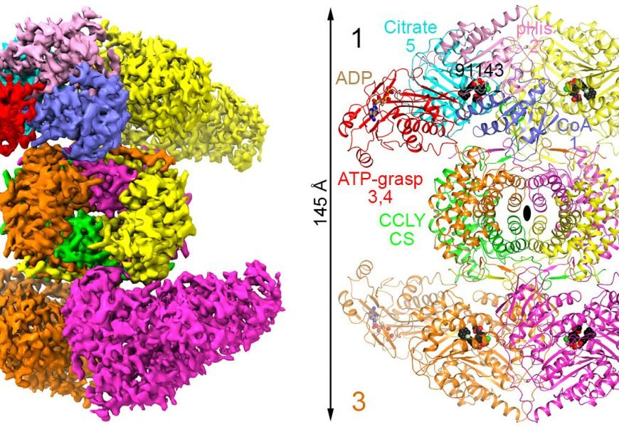 Scientists decipher 3-D structure of a promising molecular target for cancer treatment