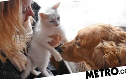 Are dog people really happier than cat people?