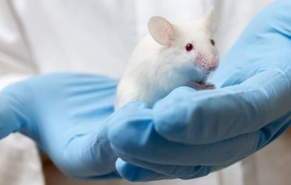 Human pancreases could be grown in RODENTS in a bid to cure diabetes