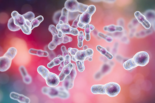 C. difficile resists hospital disinfectant, persists on hospital gowns, stainless steel