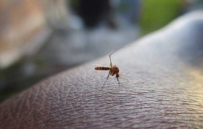 Bangladesh struggles to contain record dengue outbreak