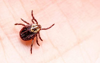 Tick bite, and now? What you should do – and what not