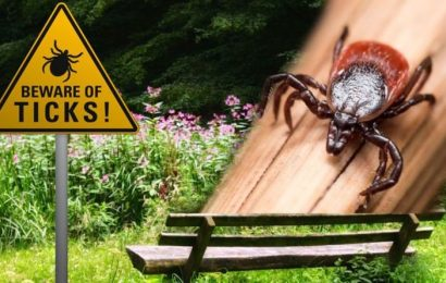 Lyme disease: Cases of the disease are on the rise – do you have this symptom?