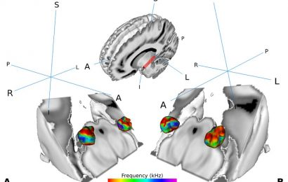 Can you hear what I say? New findings on human speech recognition