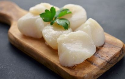 Get cooking with elegant, flavorful scallops