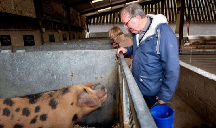 Dementia: How National Trust 'memory' farm visits can alleviate dementia symptoms