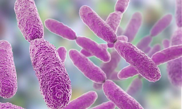 Bacteria can become resistant to drugs by 'closing their pores'