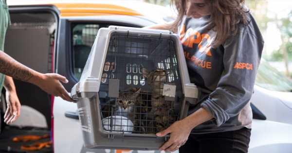 Hurricane Dorian Response: ASPCA and Wings of Rescue Fly Nearly 200 Homeless Animals to Safety