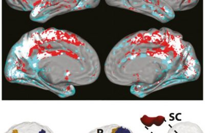 New study sheds light on how a midbrain region helps us pay attention
