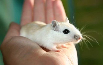 Drug reduces risk of pneumonia in newborn mice