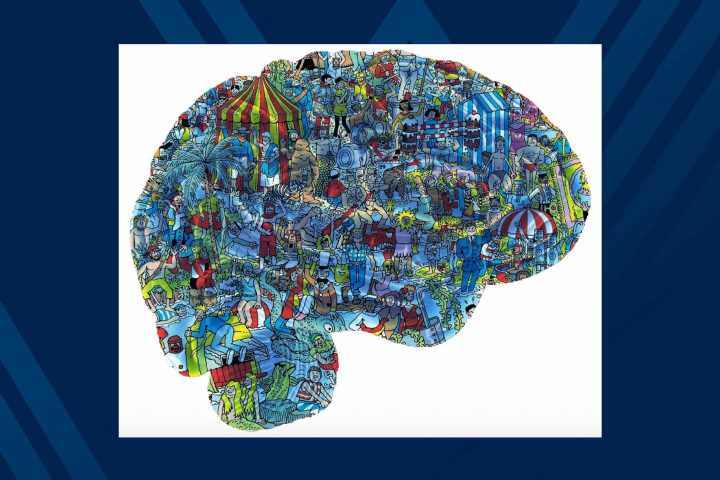 Exploring the brain in a new way: Researcher records neurons to understand cognition