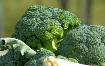 Genetics may determine who benefits from broccoli's effects on kidney health
