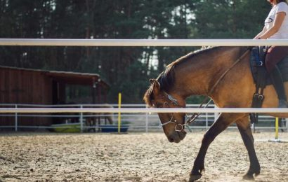 Horseback riding combined with cognitive exercises can help children with ADHD and autism spectrum