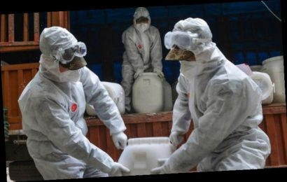 UK coronavirus: Has coronavirus peaked? Is the virus on its way out?