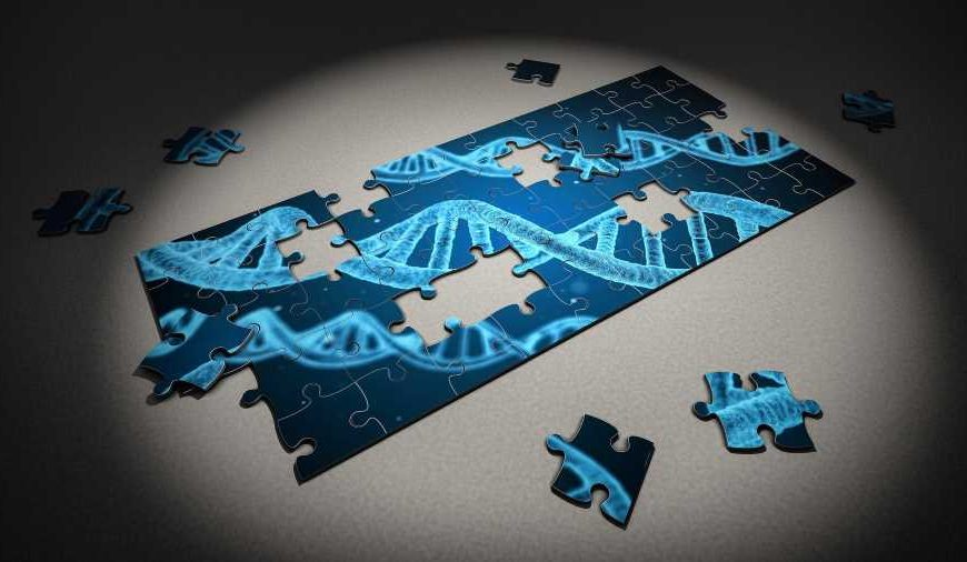 Twenty four genetic variants linked to heightened womb cancer risk