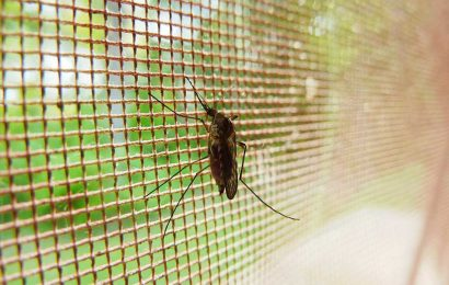 Malaria cases surge in Zimbabwe during coronavirus fight
