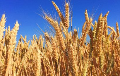 Celiac disease linked to increased risk of premature death