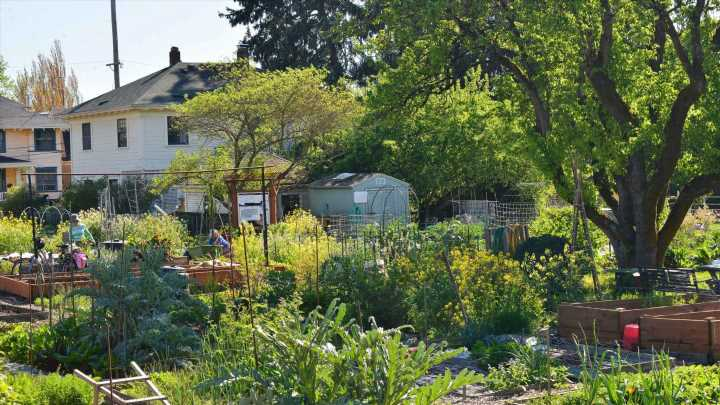 Microbiome rewilding: Biodiverse urban green spaces strengthen human immune systems