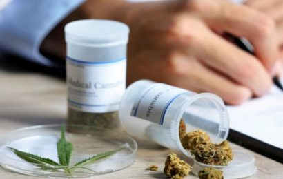 Cannabidiol appears to reduce behavioural problems – natural healing naturopathic specialist portal
