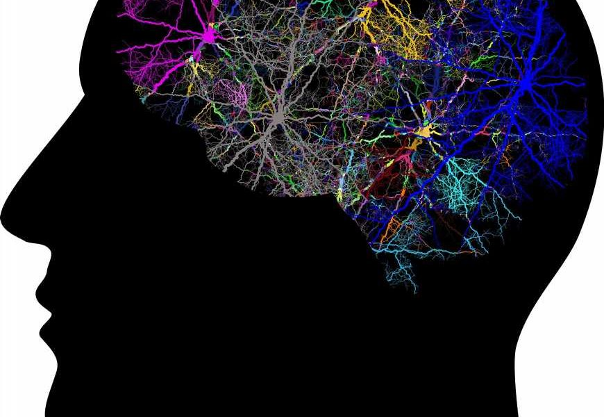 New form of brain analysis engages whole brain for the first time