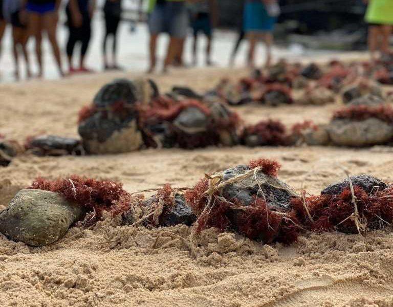 Connection to 'āina critical to health among native Hawaiians