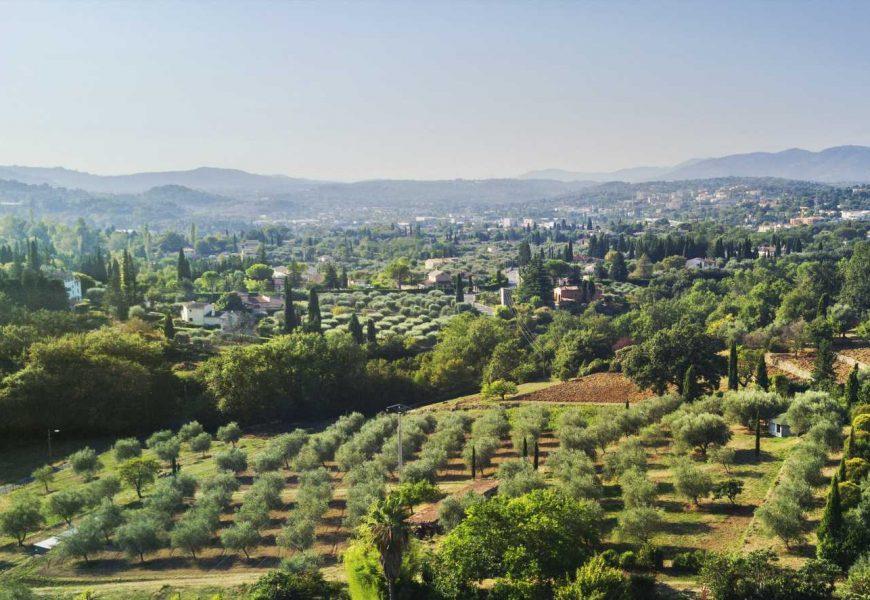 EXCLUSIVE: Lancôme Acquires Organic Rose Domain in Grasse