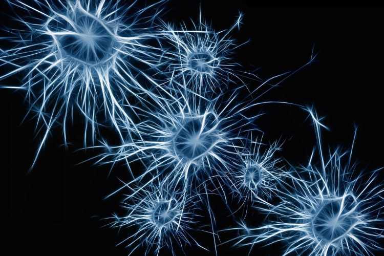 Study finds odor-sensing neuron regeneration process is adaptive