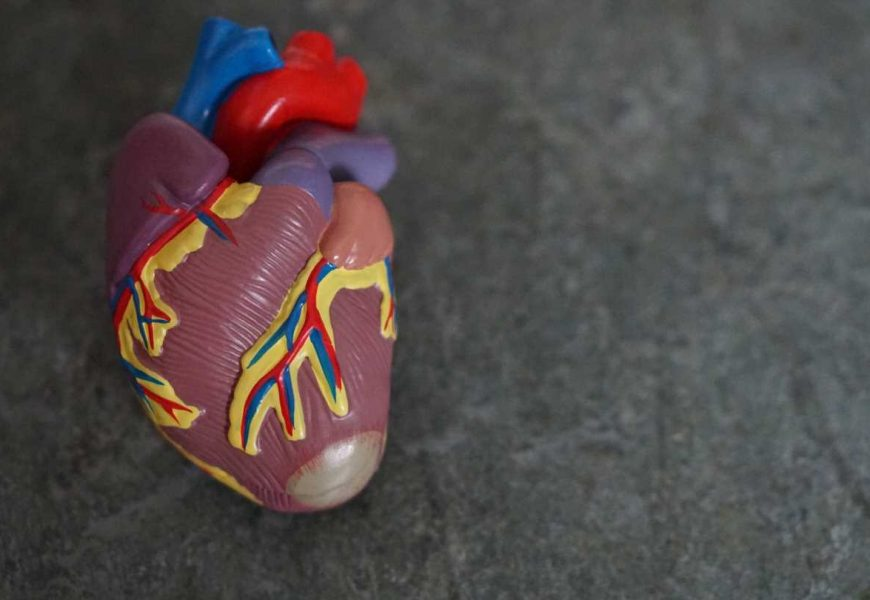 Study highlights potential targets for heart failure prevention