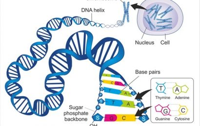 What is a DNA Diet?