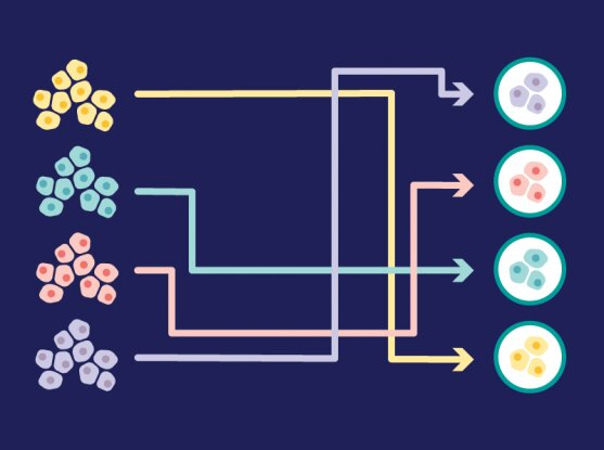 Using gene expression data to compare laboratory cancer models to real tumors