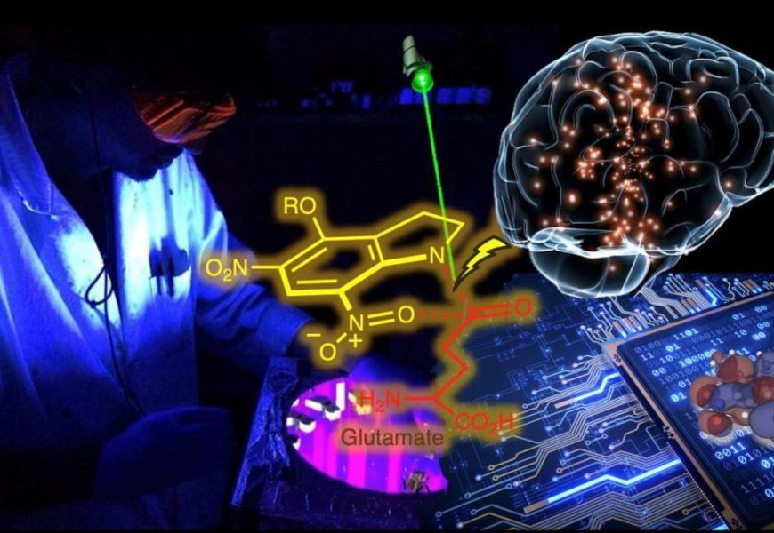 Study explains how light could activate neurons
