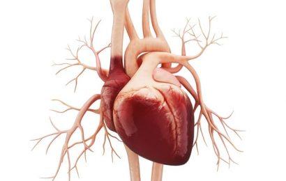 Heart Failure Causes