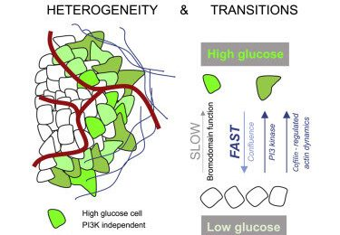 Single-cell imaging to completely define tumor micro-metabolic state