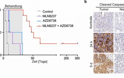 Stirring up conflicts in tumour cells
