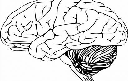 Flat brain organoids grown on 3D-printed scaffolds show intrinsic gyrification