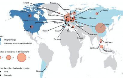 Origin of the COVID-19 virus: Thetrail ofmink farming