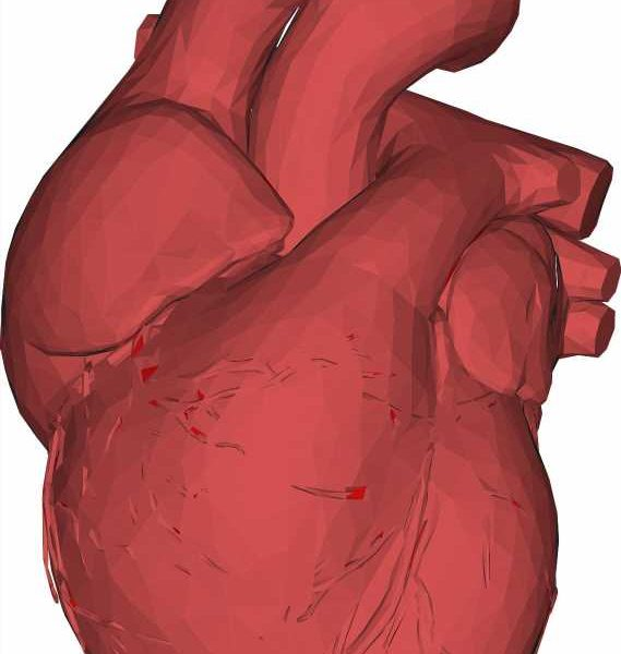 Mathematical method builds synthetic hearts to identify how heart shape could be linked to disease