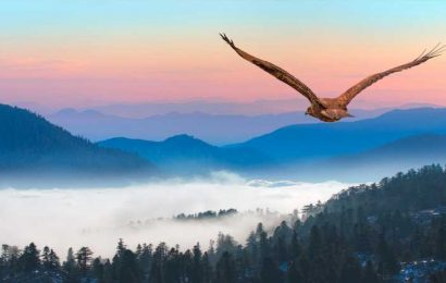 Here's What It Really Means When You See A Hawk
