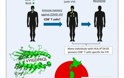 Immune genetics and previous common cold infections might help protect Japan from COVID-19