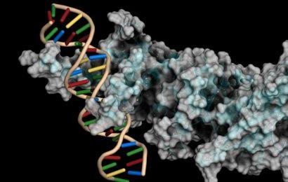 New software tool can help identify gene regulators more efficiently