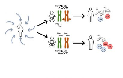 A molecular mechanism that mediates a link between fetal conditions and later health