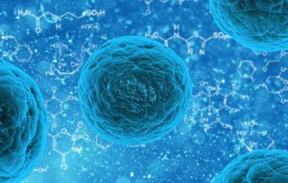 Researchers reveal new insights on mechanism that could help treat muscle-related diseases