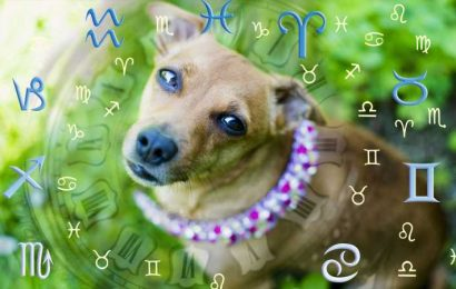 This Is The Best Dog Breed For Your Zodiac Sign