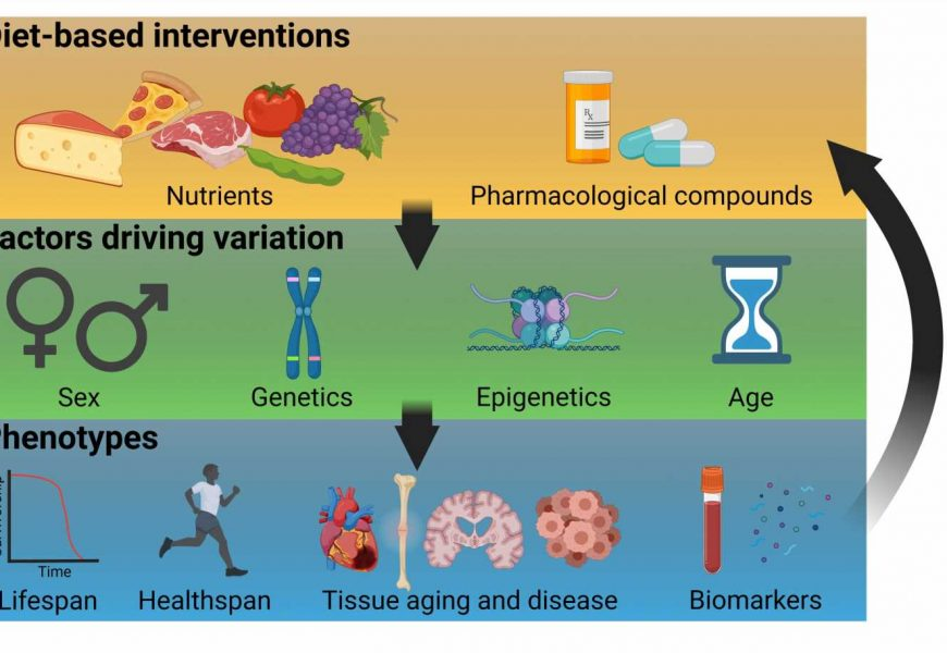 Researchers provide a framework to study precision nutrigeroscience