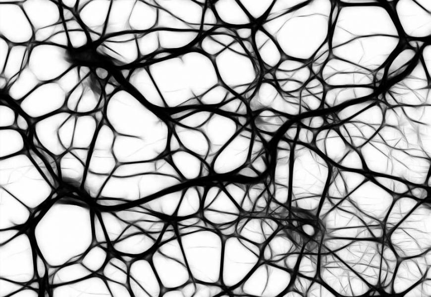 Single neurons might behave as networks